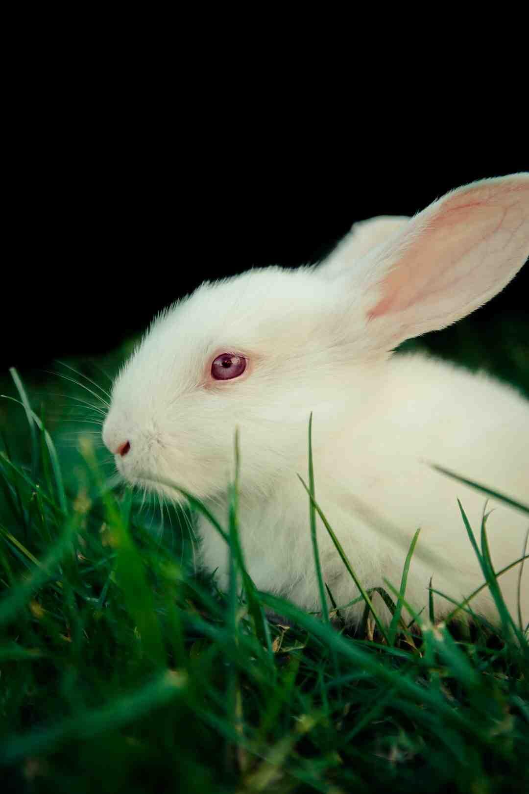 Comment caresser un lapin