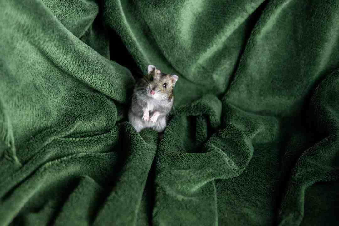 Comment faire le deuil de son hamster