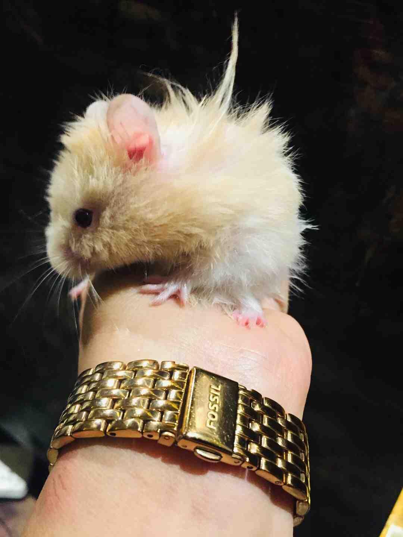 Où mettre un hamster mort ?